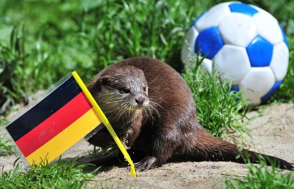 Champions League 2012/13. Final. Borussia vs. Bayern. Animales oráculos han echado las cartas