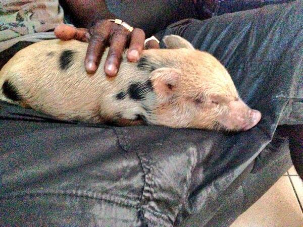 Марио Балотелли купил свинью (ФОТО)