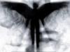Аватар болельщика GARIK123456