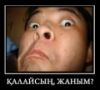 Аватар болельщика Ереке